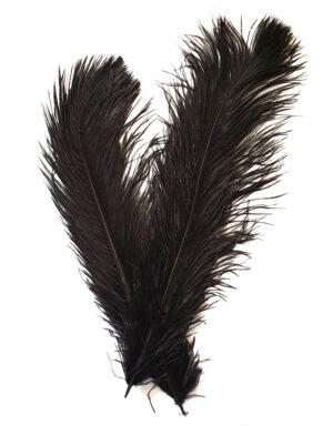 """שלישיית נוצות יען שחורות בגובה 43 ס""""מ"""