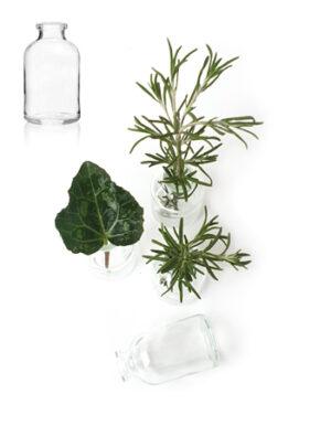 בקבוקי זכוכית לפרח | שקופים | בוהו שיק